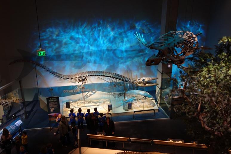 Marine tableau, circa Late Cretaceous