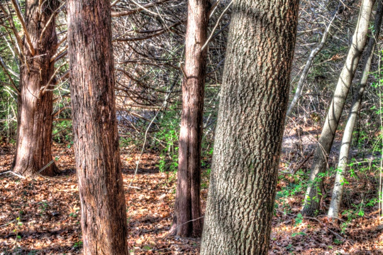Mixed hardwood. HDR (3-image merge, 2-stop intervals)