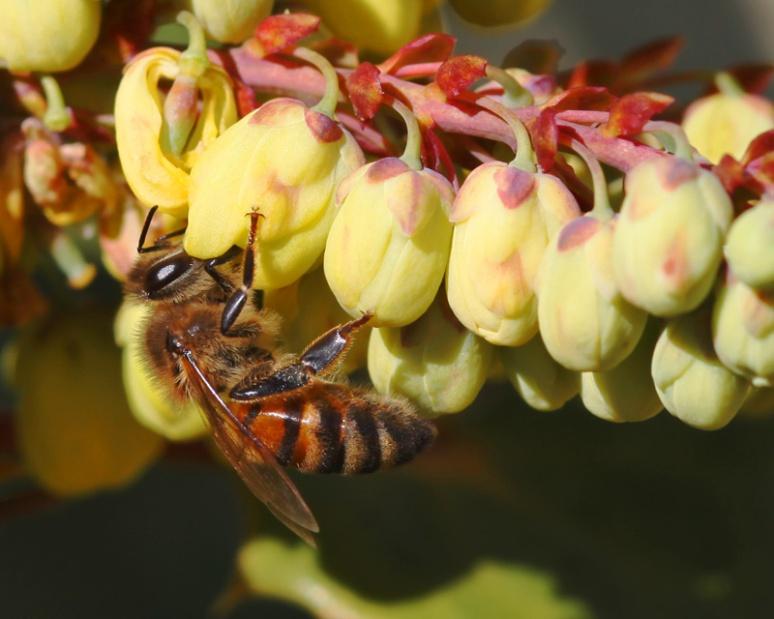More knees, same bee