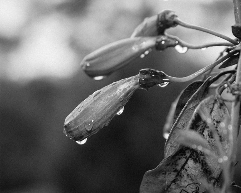 Rain's remains