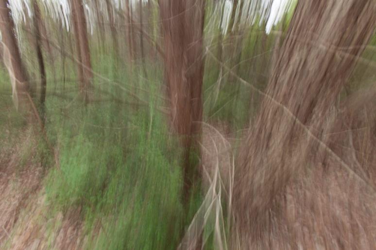 woodland vision