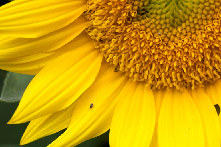Secrets of the sunflower: SW quadrant