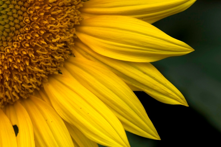 Secrets of the sunflower: SE quadrant