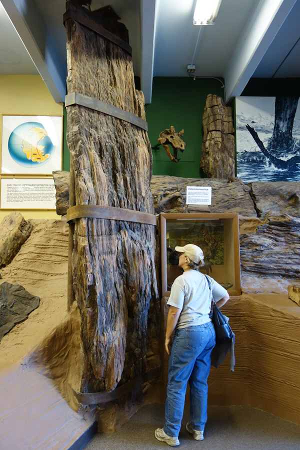 Permian log from San Juan County, UT