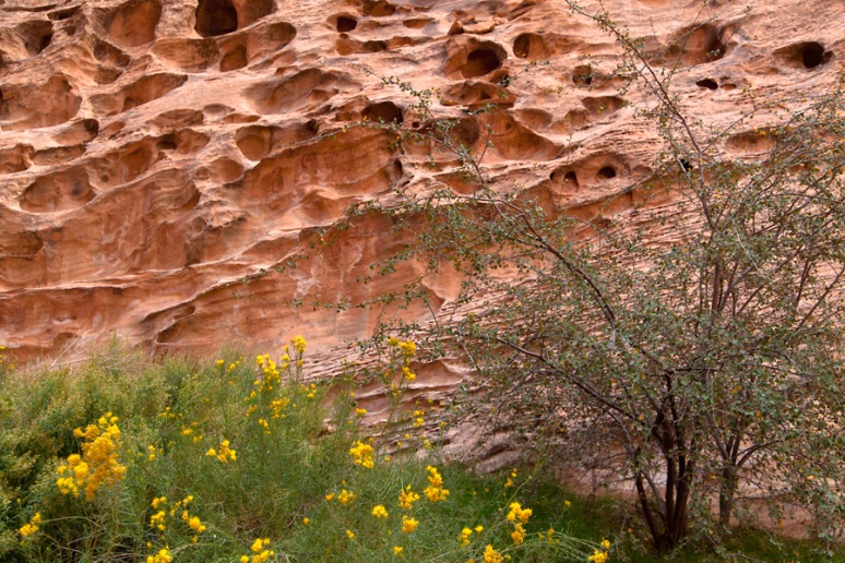 Perforations, Capitol Gorge