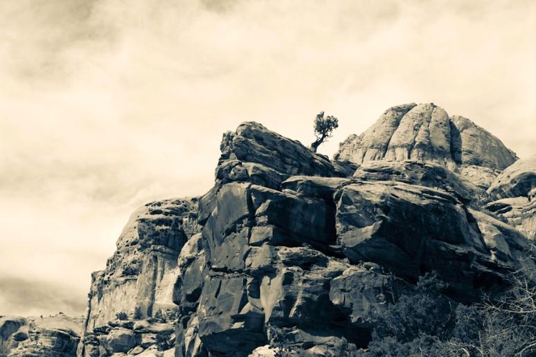 Tree on the rock, Grand Gulch