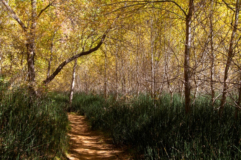 Riparian pathway