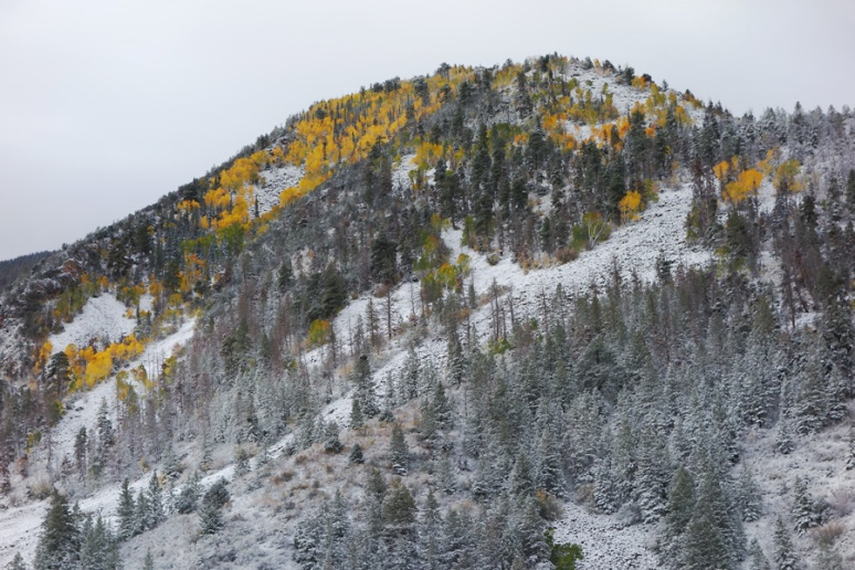 Aspen gold (with snow)