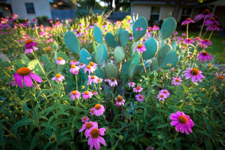 Coneflower & Cactus