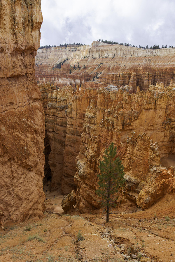 Into the abyss: Navajo Loop Trail