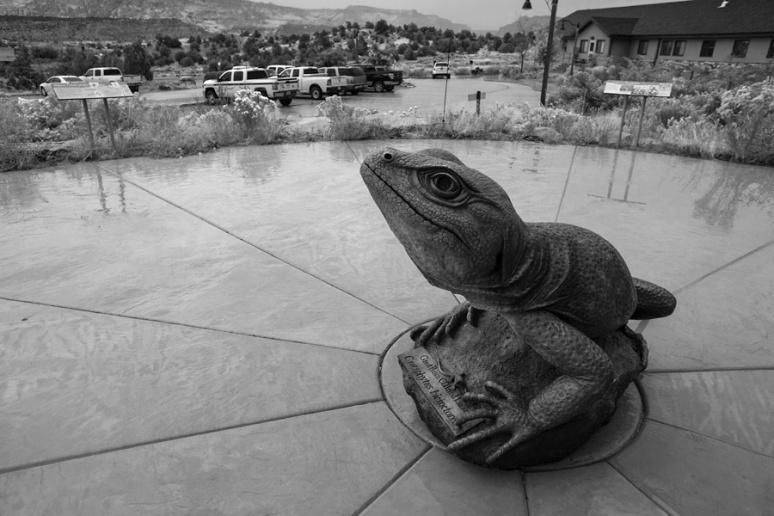 A friendly lizard: Escalante Interagency Visitor Center